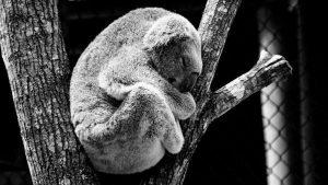 Nützliches Wissen über Schlaf